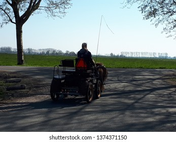 carriage with horses in dutch landscape in spring