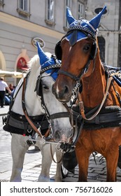 Carriage horses nuzzling in Vienna.