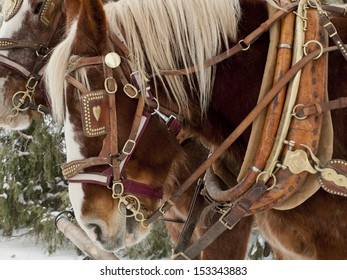 A carriage pulled by a pair of horses.