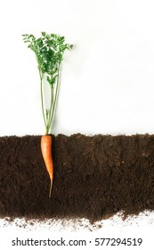 Carrot grow in ground, cross section, cutout collage. Healthy vegetable plant with leaves isolated on white background. Agricultural, botany and farming concept