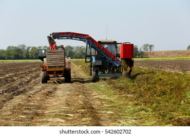 Carrot harvesting with modern agricultural equipment in field