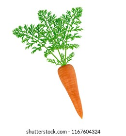 Carrot. Isolated on white background. The selected path