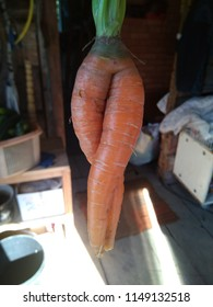 Carrot  like a womam from the front