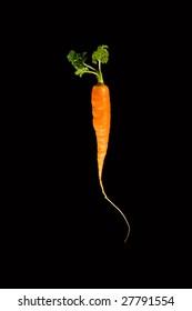 Carrot on black background