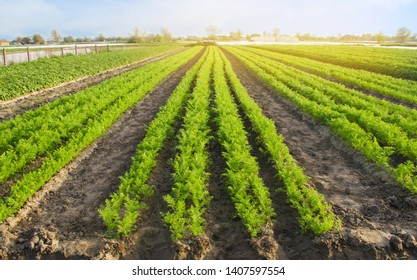 Vegetable Field Images Stock Photos Vectors Shutterstock
