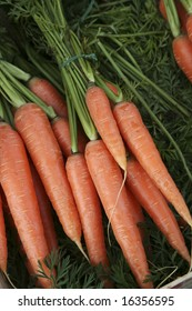 Carrot with stalks