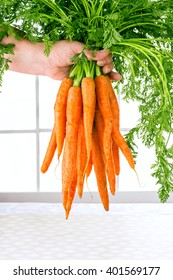 Carrot vegetable with leaves isolated on white background cutout in human hand. Woman holding bunch of organic carrots on the white window background