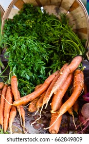 Carrots with green tops in a basket at farmers market