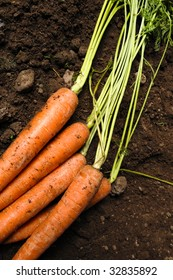 carrots lying on the earth or soil