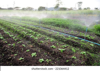 Carrots organic farm