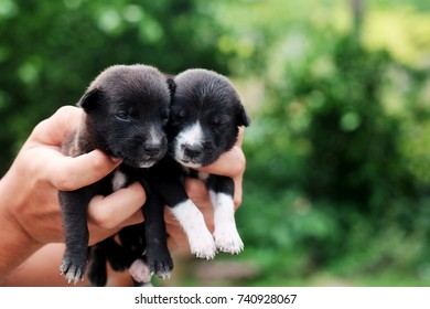 carry poor black breed puppy of Thailand with human big hand .have some space for write wording