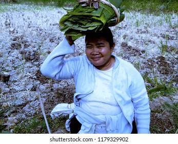 Carrying Banana Leaves On The Head In The Farm Field, Banjar Kuwum, Ringdikit, North Bali, Indonesia
