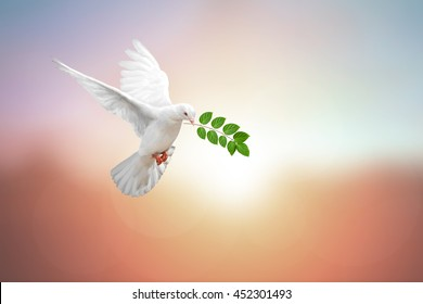 carrying leaf branch on pastel background and clipping path and international day of peace 2017