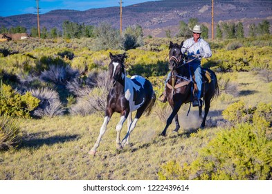 Carson City, NV / USA - 08-15-2013: Smiling cowboy, riding a brown stallion, trains spotted colt through sage-covered countryside.