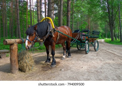 Cart horse stop on forest road in summer.