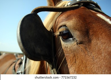 A cart horses eye behind a blinker with a blue sky background