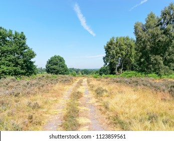 A cart track travels between grass and heather verges and stands of trees on open land at Budby South Forest, on the fringes of Sherwood Forest, in Nottinghamshire.