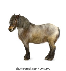 Carthorse in front of a white background