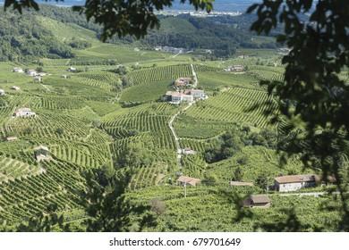Cartizze hills panorama seen from Osteria Senza Oste, in Conegliano-Valdobbiadene area, where Prosecco vines are grown.