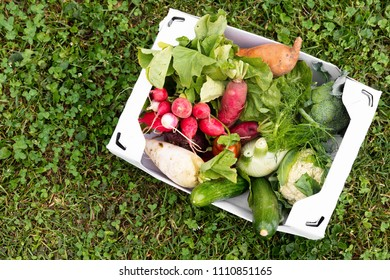 carton box full of fresh organic vegetables lying in a flower meadow, concept delivery service