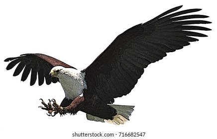 Cartoon (cartoonized) image of a fish eagle about to attack, isolated on a white background