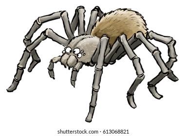 Cartoon illustration of cute tarantula spider as found in Peru South America
