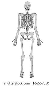 cartoon image of female skeleton
