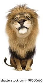 A cartoony proud lion king staring suspiciously.