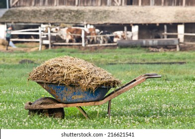 Carts with natural cow manure standing on farm
