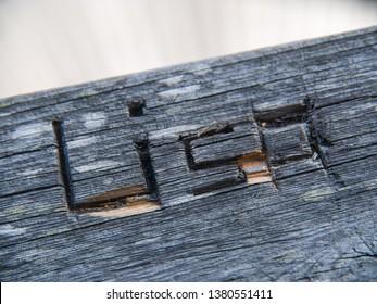 carved name Lisa
