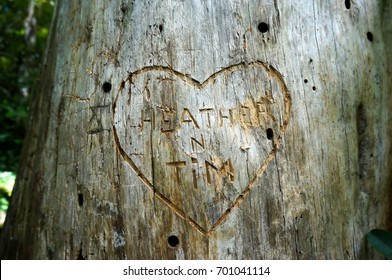 Carved Sweetheart's Name in a Tree
