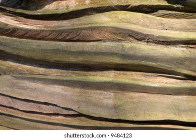 Carved tree trunk dappled with sunlight