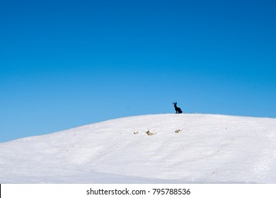 Carved wooden Jackalope figure stands on a snow covered hill in rural Wyoming on a sunny winter day.