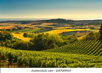 Casale Marittimo,vineyards and countryside landscape in Maremma. Pisa Tuscany, Italy Europe.