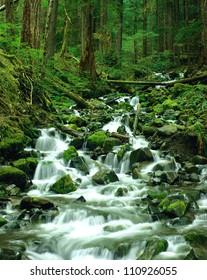 Cascade falls, Olympic National Park, Washington, USA