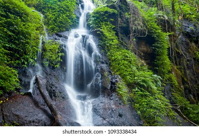 Cascade Falls. Waterfall streaming over rocks, moss and vegetation in rainforest. Idyllic natural scene.