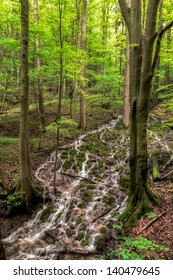 Cascade in a Spring Forest