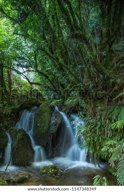 Cascade waterfall in the bush