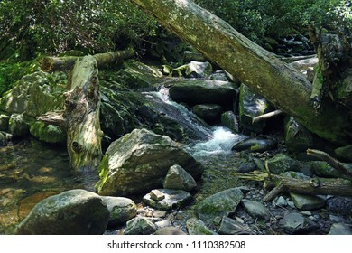 Cascading river in the Great Smoky Mountains Natinal Park