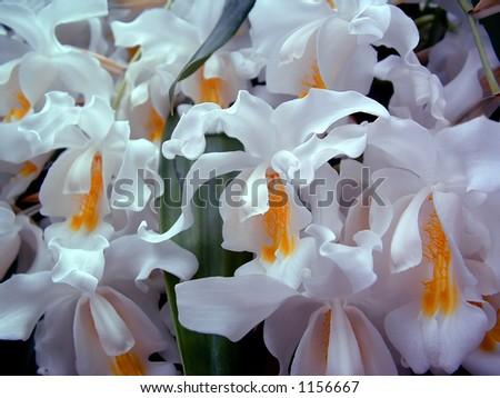 Cascading White Flowers Stock Photo Edit Now 1156667 Shutterstock