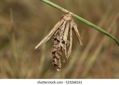 Bagworms Images, Stock Photos & Vectors | Shutterstock