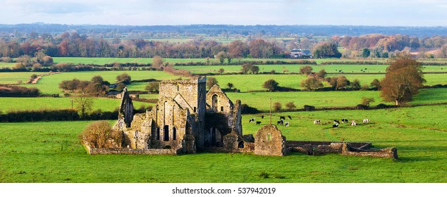 Cashel, Ireland. Panoramic view of ruins of an Hore Abbey in Cashel, Ireland. It is a ruined Cistercian monastery and famous landmark in Tipperary. Landscape with cows