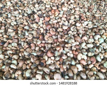Cashew nuts that have not been peeled are pile in a warehouse of the processing plant.