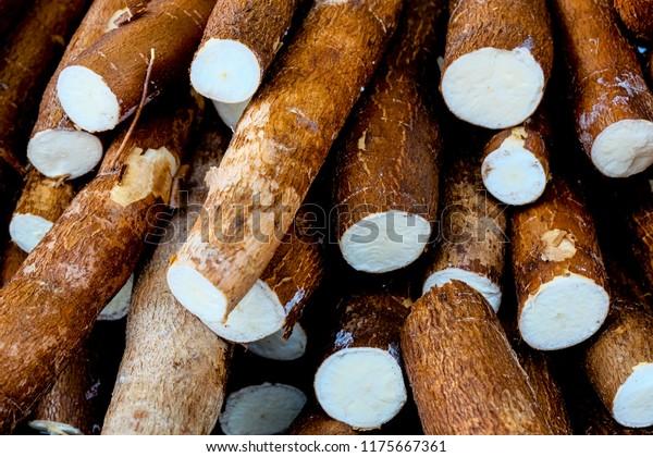 Cassava, aussi appelé manioc, yuca, balinghoy, mogo, mandioca, kamoteng kahoy, tapioca et racine de manioc, un arbuste ligneux de la famille Euphorbiaceae originaire d'Amérique du Sud.