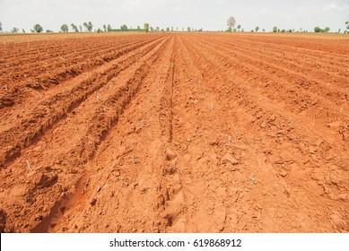 Cassava, cash crops, monoculture in Thailand, Myanmar, Laos, Vietnam, Cambodia