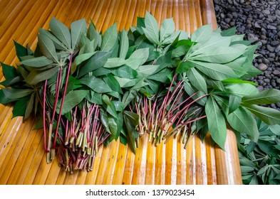 Cassava plant for making Tapioca, Indonesia