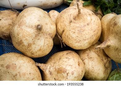 cassava, Yam bean, Pachyrhizus erosus (L.) Urbar