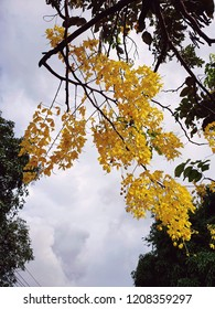 Cassia fistula is beautiful yellow flowers on the big tree