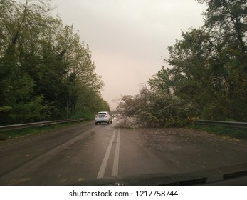 Cassino, Italy - October 29, 2018 - Trees fallen due to the strong wind and rain along the road