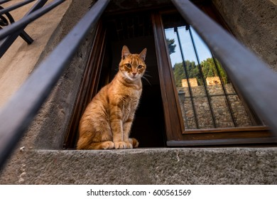 Castagneto Carducci is one of the most popular towns on the Etruscan Coast, Leghorn, Italy, cat at the window